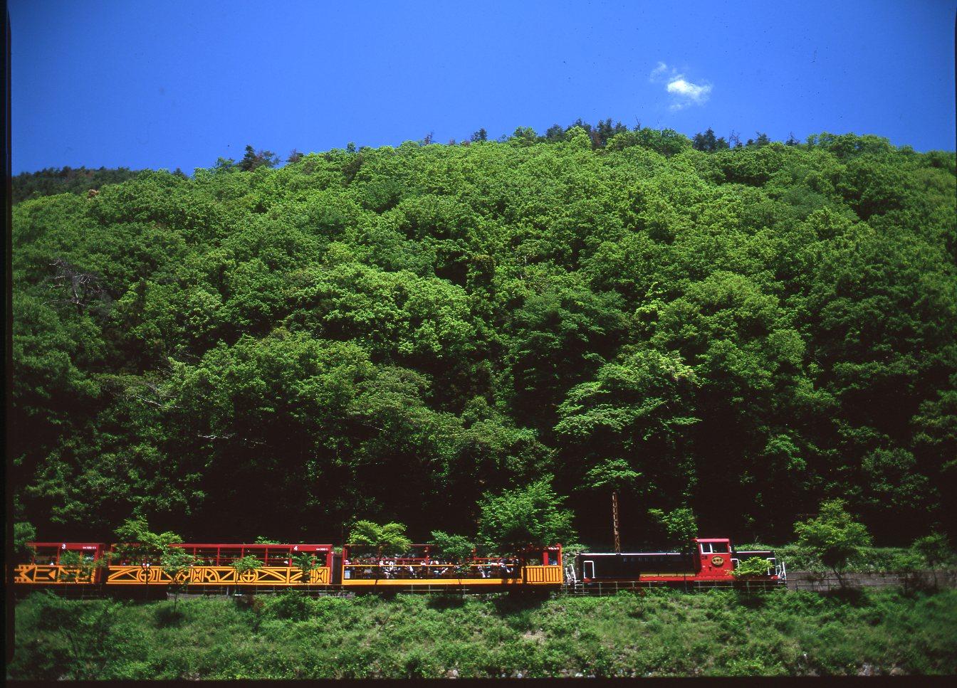 新緑の嵯峨野トロッコ鉄道